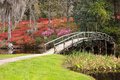 View middleton plantation garden curved pedestrian bridge where visitors come every year spring to witness walk hillside blooming Stock Image