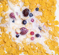 View of milk pouring into cereal appetizing top with berries Royalty Free Stock Images