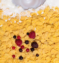 View of milk pouring into cornflakes appetizing top with berries Stock Image