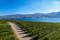 View from mission hill winery of lake okanagan and the mountians Stock Photography