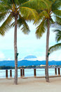 View of Mount Kinabalu between two coconut trees Stock Photos
