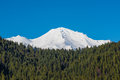 View of Mount Shasta peaks with alpine forest Royalty Free Stock Photo