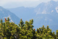 View on mountains and small pines from Krippenstein Plateau in Austrian  Alps Royalty Free Stock Photo