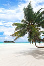 View of nice tropical beach with palm tree seychelles Royalty Free Stock Images