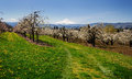 A view of orchards in Hood river Royalty Free Stock Photo