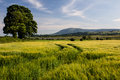 View over a barely field barley towards the river nith and towards criffel hill dumfriesshire scotland Stock Photos