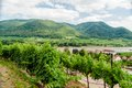 View over vineyard to Danube River Stock Images