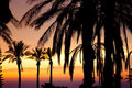 View of palm in front of sunset Stock Photography