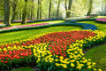 A view in the park keukenhof Royalty Free Stock Photo