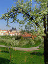 View on Prague gothic Castle with flowering trees Royalty Free Stock Image