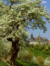 View on Prague gothic Castle with flowering trees Royalty Free Stock Photos