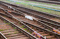 View of the railway track Stock Photography