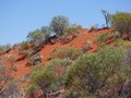 View of the red earth of the outback of australia dunes with desert vegetation in northern territory in Stock Photo
