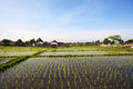 View of rice field bali indonesia Stock Photos