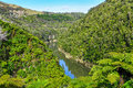 View of the river in Whanganui National Park, New Zealand Royalty Free Stock Photo