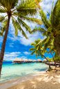 View of the sandy beach with palm trees, Bora Bora, French Polynesia. Vertical Royalty Free Stock Photo
