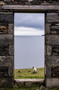 View of sea pastures and lamb from a stone door of an old ruin near the ocean in the isle harris scotland uk Royalty Free Stock Images
