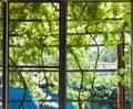 View of shady vineyard on patio through window Royalty Free Stock Photo