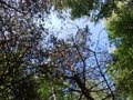 View of the sky in the forest