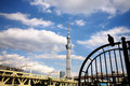 View of sky tree. Royalty Free Stock Image