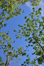 View of sky and tree Royalty Free Stock Photo