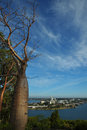 View on south Perth with old  boab Royalty Free Stock Photo