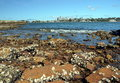 View of sydney skyline in daytime from woolwich nsw australia rocks and dead shells the foreground skycrapers the Stock Photo
