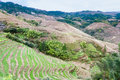 view of terraced fields and cottage in Tiantouzhai Royalty Free Stock Photo