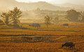 View of traditional farm in nort of Thailand Stock Image