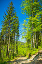 View from trail to the Pilsko Peak from Beskidy mountains Royalty Free Stock Photos