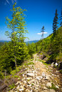 View from trail to the pilsko peak from beskidy mountains poland Royalty Free Stock Image