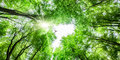 View through tree canopy with bird soaring looking up fresh green to sky and sunlight a overhead Royalty Free Stock Image
