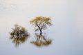 View of trees in Lake Nakuru National Park Royalty Free Stock Photo