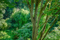 View from treetop canopy of Stock Photo