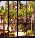 View of a tropical garden through panoramic window Royalty Free Stock Images