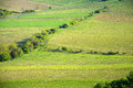 View of a vineyard in the Palava region of South Moravia Royalty Free Stock Photo