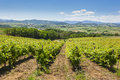 View of vineyards on clear summer day Royalty Free Stock Photo