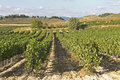 View of a wineyard in la rioja, Spain Royalty Free Stock Photo