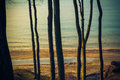 View wooded shore baltic sea from the of Royalty Free Stock Image