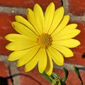 A view of a Yellow Flower in the Pastor Noster Church in Jerusalem Royalty Free Stock Photo