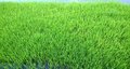 View of young rice sprout ready to growing in the rice field thailand Stock Photos