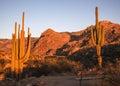Viewing Catalina Royalty Free Stock Photo