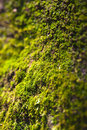 Views of the moss image wabi Royalty Free Stock Photos