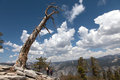 Views from sentinel dom dome towards half dome and yosemtite falls Royalty Free Stock Photo