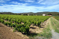 Vigne en France Photo stock