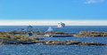 Viking Line ferry ship on Baltic Sea Royalty Free Stock Photo