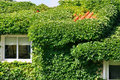 Villa covered by green plant Royalty Free Stock Photo