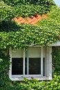 Villa covered by green plant and window Royalty Free Stock Photo