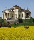 Villa la rotonda with yellow flower field of rapeseed in vicenza italy Royalty Free Stock Photos