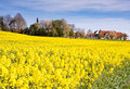 Village behind a rape field Royalty Free Stock Photo